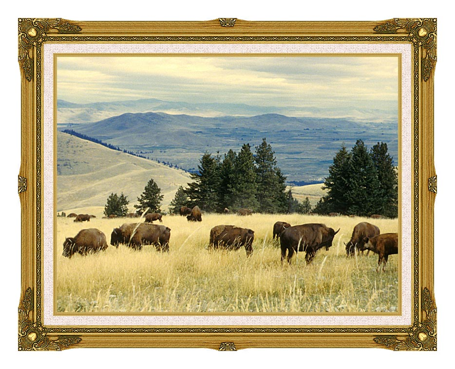 U S Fish and Wildlife Service Bison Herd with Museum Ornate Frame w/Liner