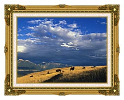 U S Fish And Wildlife Service Buffalo On The Range canvas with museum ornate gold frame