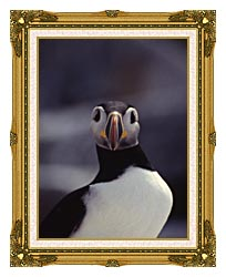 U S Fish And Wildlife Service Atlantic Puffin canvas with museum ornate gold frame