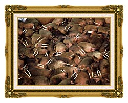 U S Fish And Wildlife Service Walrus Herd canvas with museum ornate gold frame