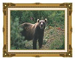 U S Fish And Wildlife Service Kodiak Bear canvas with museum ornate gold frame