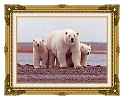 U S Fish And Wildlife Service Polar Bear Female With Cubs canvas with museum ornate gold frame