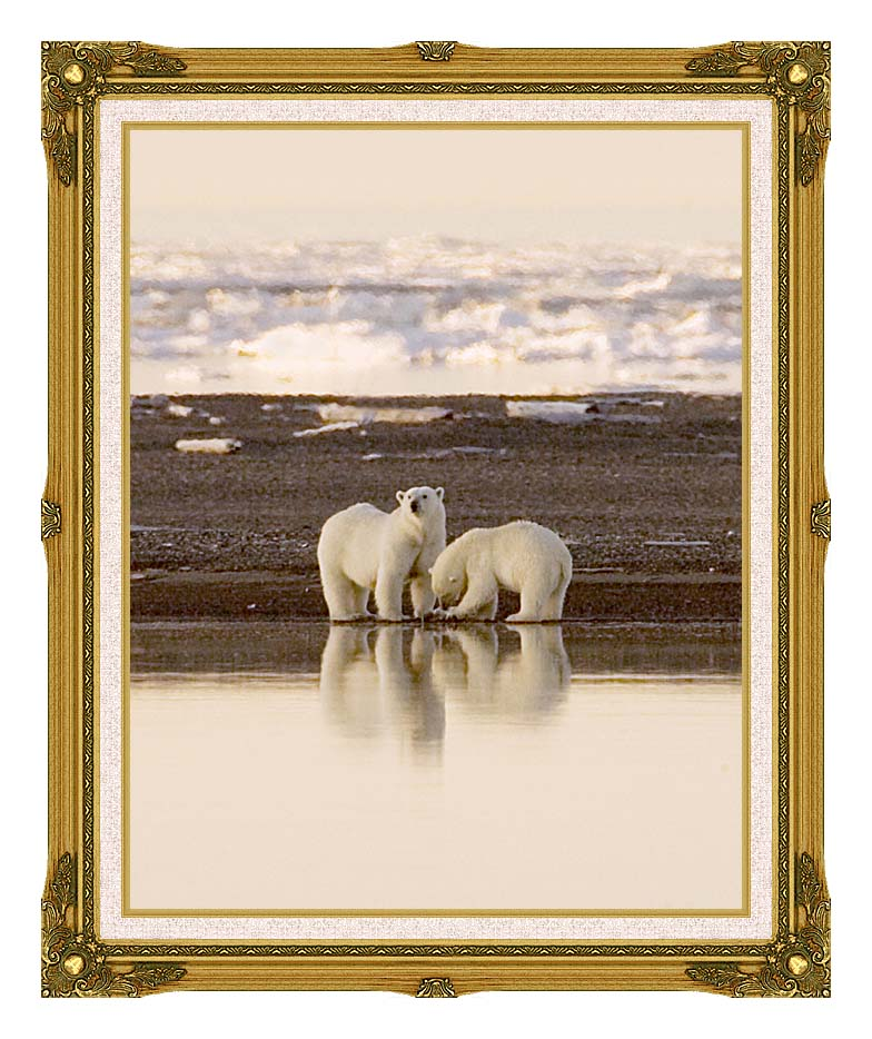 U S Fish and Wildlife Service Polar Bears with Museum Ornate Frame w/Liner