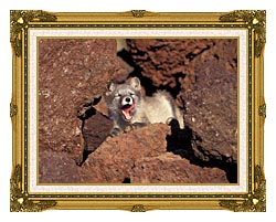 U S Fish And Wildlife Service Arctic Fox canvas with museum ornate gold frame