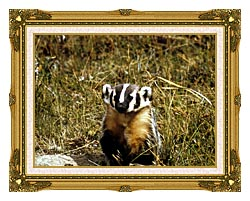 U S Fish And Wildlife Service Badger canvas with museum ornate gold frame