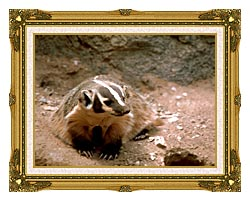 U S Fish And Wildlife Service Badger Art canvas with museum ornate gold frame