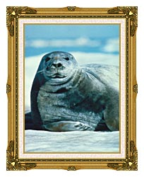 U S Fish And Wildlife Service Bearded Seal canvas with museum ornate gold frame