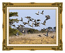 U S Fish And Wildlife Service Flock Of Waterfowl canvas with museum ornate gold frame