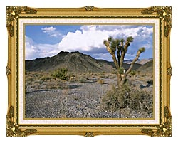 U S Fish And Wildlife Service Joshua Tree In The Desert canvas with museum ornate gold frame