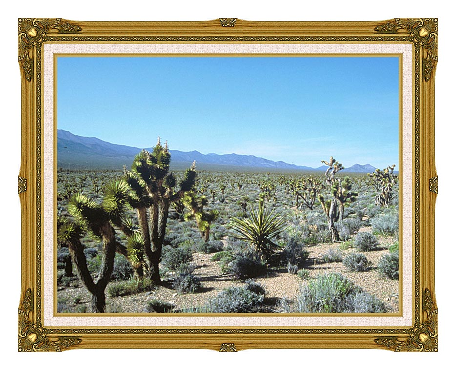 U S Fish and Wildlife Service Yucca Forest with Museum Ornate Frame w/Liner
