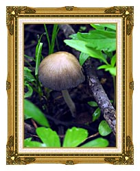 U S Fish And Wildlife Service Mica Cap Mushroom canvas with museum ornate gold frame