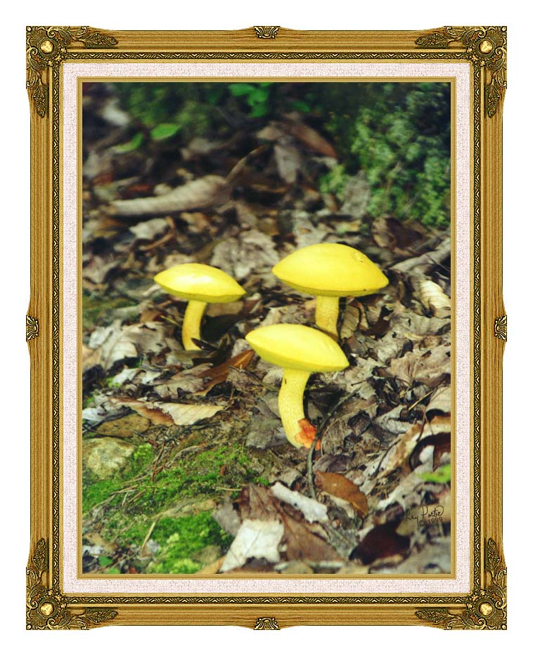 Ray Porter Yellow Bellys with Museum Ornate Frame w/Liner