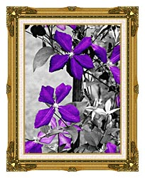 Ray Porter Purple Passion Black And White With Color canvas with museum ornate gold frame