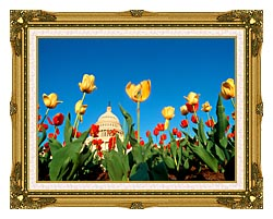 Visions of America Tulips In Spring With U S Capitol Building canvas with museum ornate gold frame