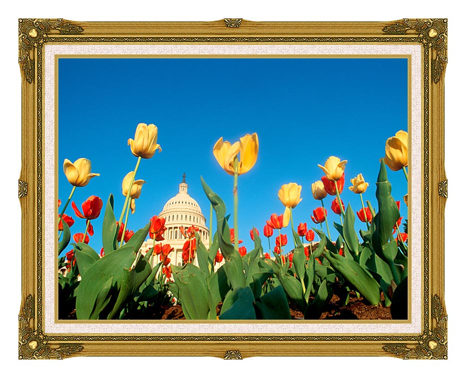 Visions of America Tulips in Spring with U S Capitol Building with Museum Ornate Frame w/Liner