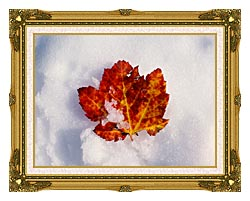 Visions of America Red Maple Leaf In Snow Acadia National Park Maine canvas with museum ornate gold frame