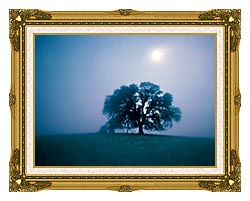 Visions of America Solitary Oak Tree On A Misty Morning California canvas with museum ornate gold frame