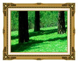 Visions of America Forest Floor At El Dorado National Forest California canvas with museum ornate gold frame