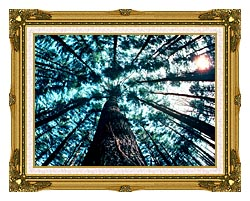 Visions of America Trees In Forest Saratoga New York canvas with museum ornate gold frame